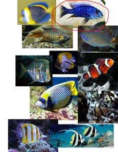 fish ideas 2