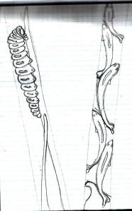 more sketches