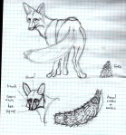 fox sketch, face, tail